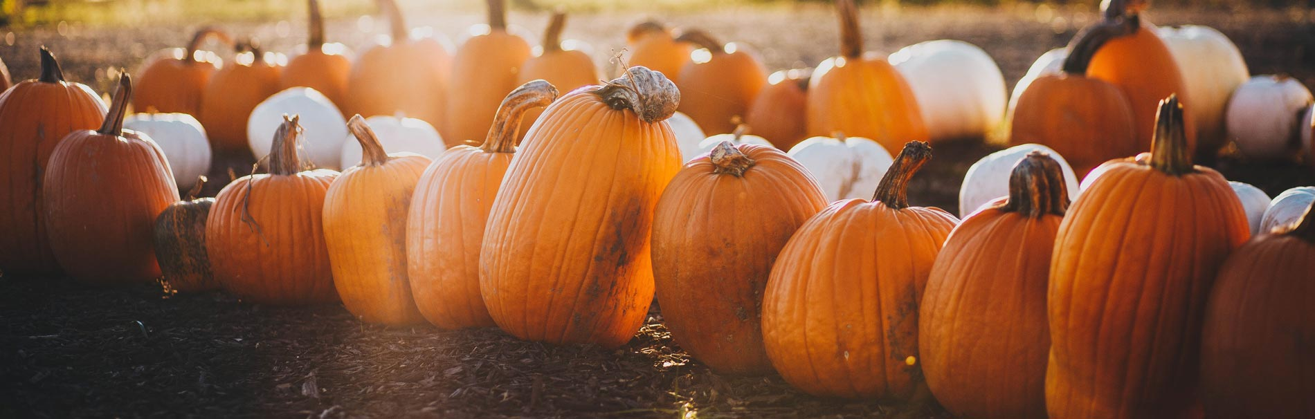 11 Things We Love About Fall - Senior Retirement