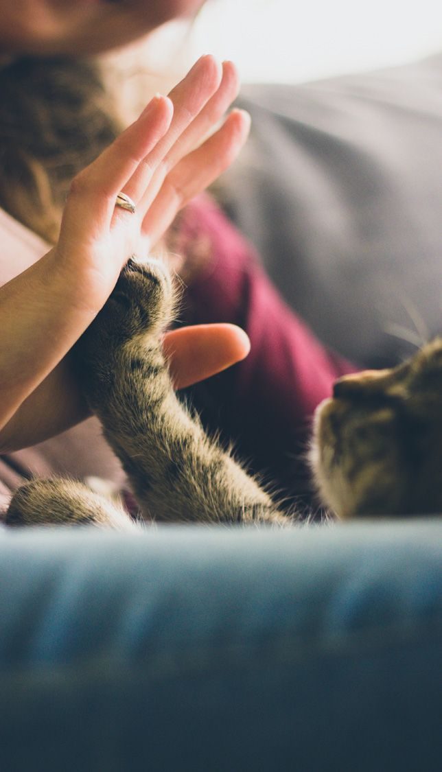 Cuddly cat offers a high-five